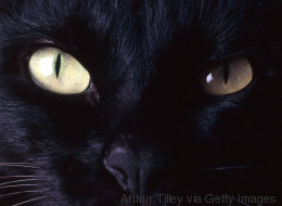 From Frame Rate To Black Cat Hate: This Week's Curios