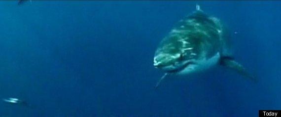ERIC TARANTINO CALIFORNIA SHARK ATTACK
