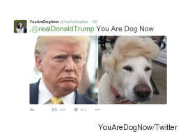 This Twitter Account Will Match You With Your Doggy Doppelganger