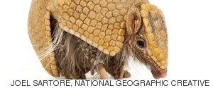 JOEL SARTORE NATIONAL GEOGRAPHIC CREATIVE