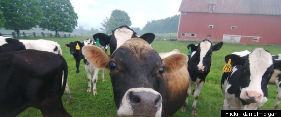 HEALTH BENEFITS OF GRASSFED BEEF