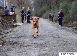 Bloodhound Runs Half-Marathon, Leaves Humans For Dust And Finishes 7th
