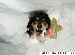 Autriche : des chiens entraînés à sauver des vies (VIDÉO)
