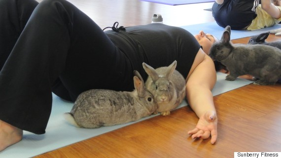 bunny yoga richmond bc
