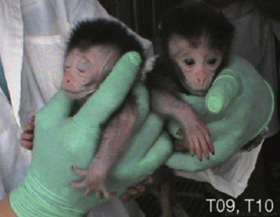 scimmie esperimenti