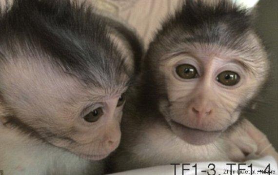 scimmie esperimento