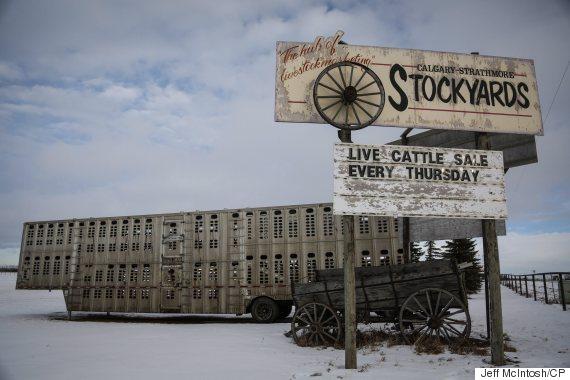 strathmore stockyards