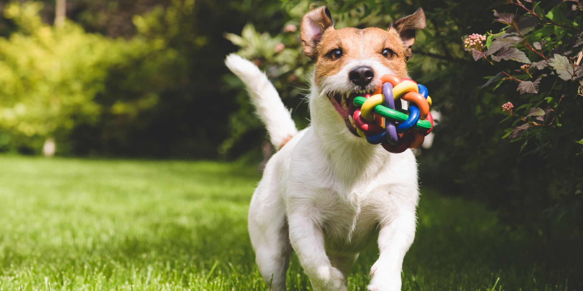 http://i.huffpost.com/gen/3929856/images/o-DOGS-facebook.jpg