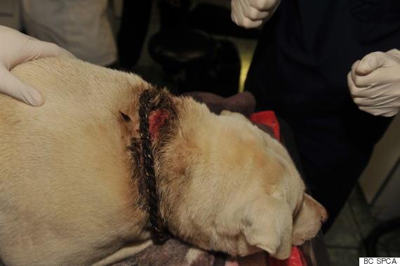 archer dog animal cruelty