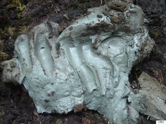 kisameet clay
