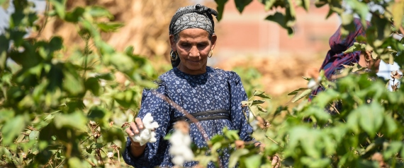 FARMER EGYPT