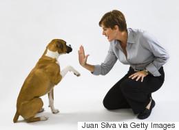 Des tours faciles que vous voudrez apprendre à votre chien
