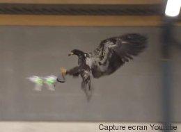 La police néerlandaise a trouvé son arme fatale contre les drones