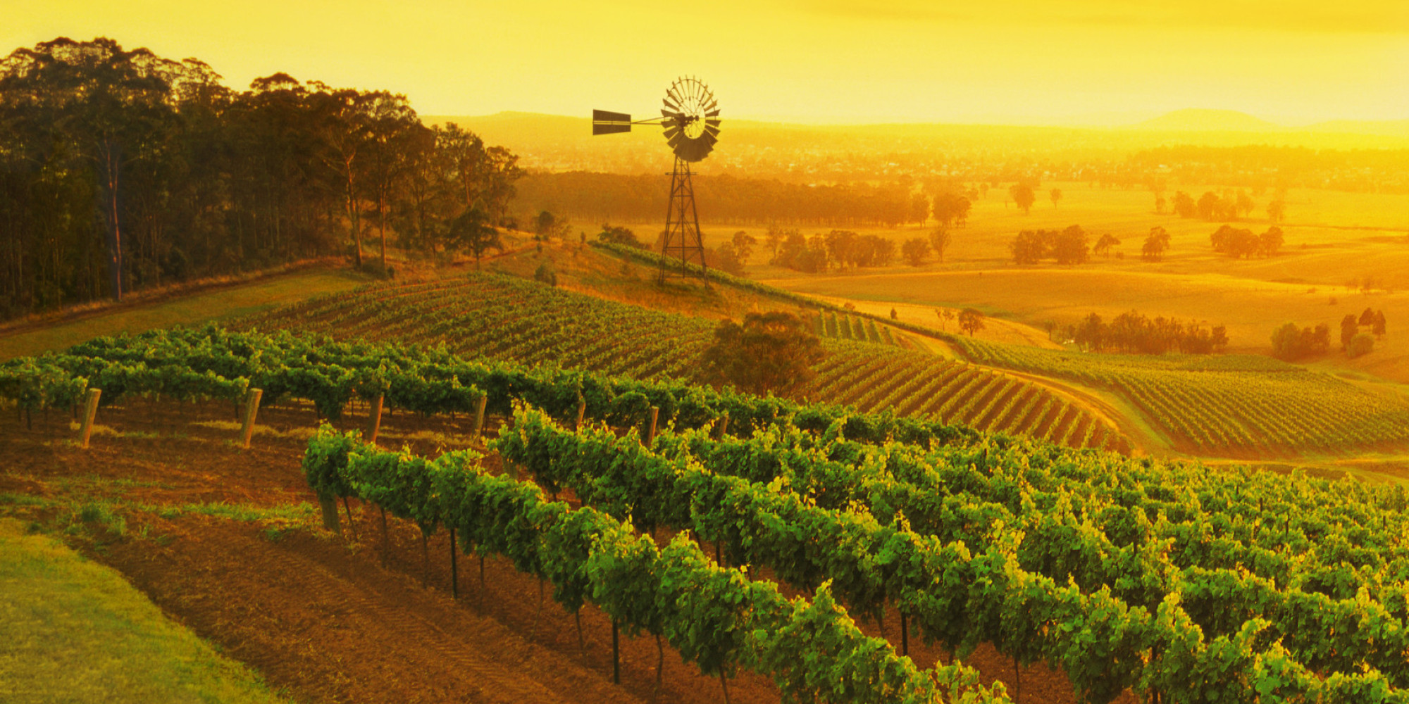 A Guide To Australia's Wine Regions, From Wine Experts