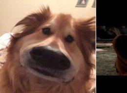 Le nouveau filtre Snapchat est parfait pour votre chien