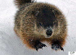 Canada's Groundhogs Make Clashing Weather Predictions