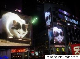All Month Long, This Cat Video Will Play In Times Square