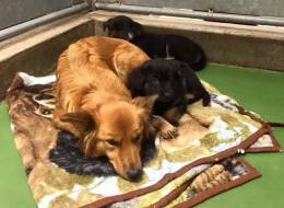 Dog Breaks Out Of Her Kennel To Comfort Crying Puppies