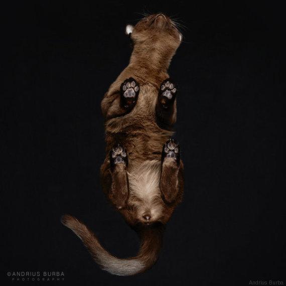 gatto 11