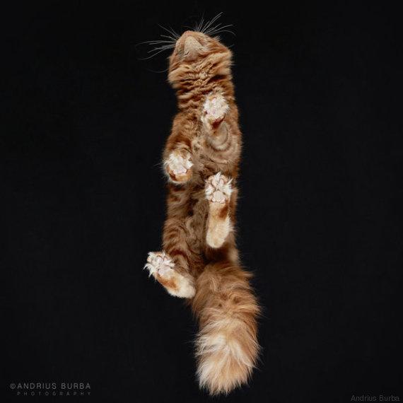 gatto 15