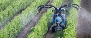 Pesticides Vins