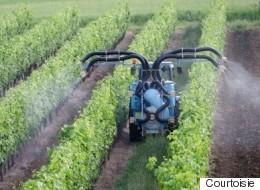 À propos des pesticides dans le vin