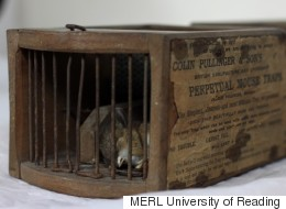 Mousetrap Mystery After Rodent Killed By 150-Year-Old Museum Exhibit