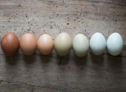 Petit guide à l'usage de ceux qui doivent remplacer les œufs