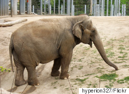 B.C. Woman Petitions To Free Elephant From 'Concrete Prison'