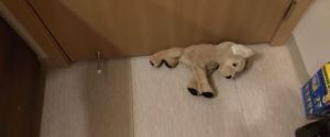 DOG STUFFED TOY UNDER DOOR