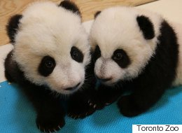 Now's Your Chance To Name A Giant Panda Cub