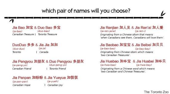 giant panda cub names