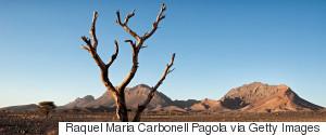 DESERT TREE SAHARA