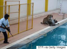 En Inde, un léopard s'introduit dans une école et blesse 5 personnes