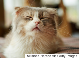 This Is Why Your Cat Is Sneezing
