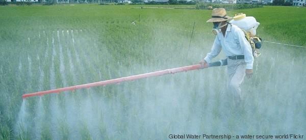 Attenzione ai pesticidi dentro e fuori dal piatto