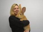Giant Rabbit The Size Of A Dog Needs A New Home