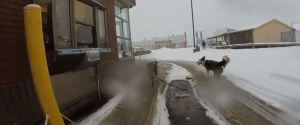 DOGSLED TIM HORTONS
