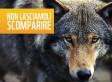 Aiutateci a fermare il piano di abbattimento dei lupi