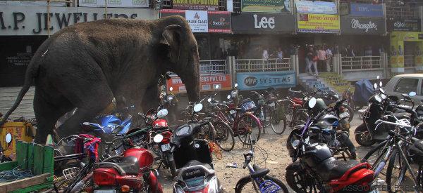 Une éléphante affolée saccage une ville en Inde (VIDÉO/PHOTOS)