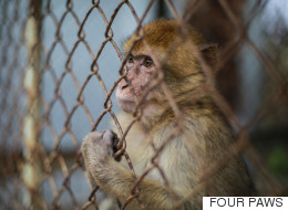 Graphic Photos Show What Happens To Animals Abandoned In Gaza Zoo
