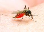 Une épidémie de Zika dans le sud de la France? C'est a priori impossible