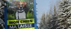 Dog Ski