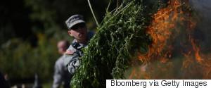 MARIJUANA PLANTS DRUG ENFORCEMENT