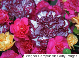 What The Colour Of Your Bouquet Is Telling Your Valentine