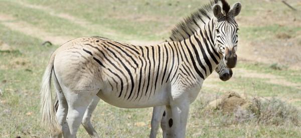 Cet animal disparu il y a 130 ans renaît grâce à la science