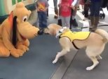 Adorable Moment Guide Dog In Training Meets His Idol At Disneyland