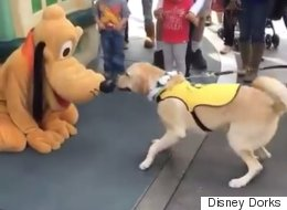 Adorable Moment Trainee Guide Dog Meets His Idol At Disneyland And Absolutely Loses It