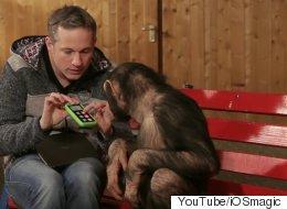 You Haven't Seen Pure Joy Until You've Seen Monkeys Watch iPad Magic