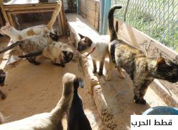 خاطر بحياته من أجلها.. طبيب ليبي نذر حياته لإنقاذ الحيوانات من الحروب!